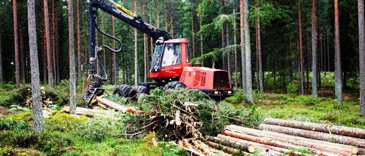 Harvester in a Swedish forest harvesting trees
