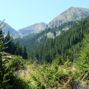 Forest in National Park Retezat