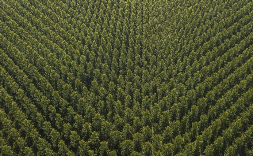 What is the future of plantation forests in Europe?