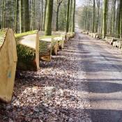stammholzversteigerung