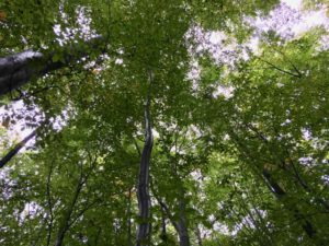 European Commission proposes to assess sustainability of forest biomass through risk-based approach