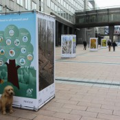 10 cubes showing large forest Posters infront of the European Parliament