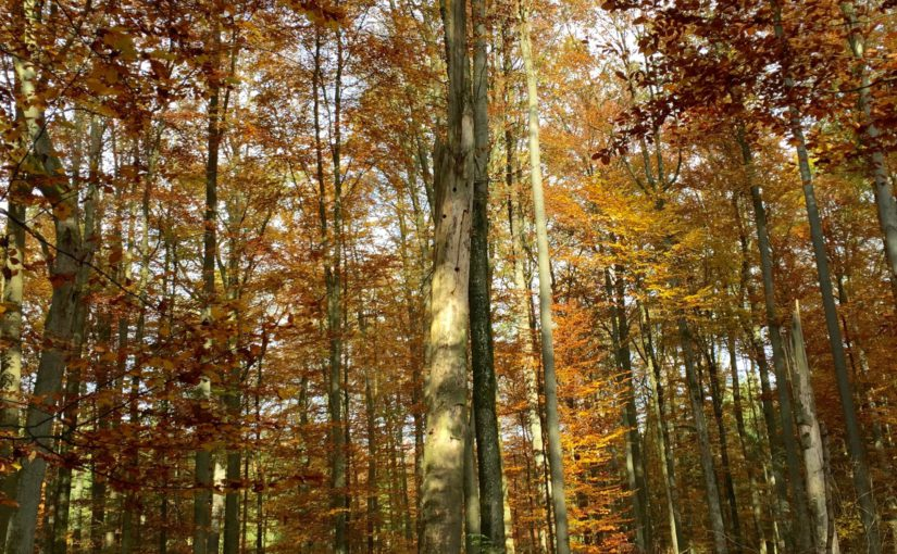 Executive Director visits Bavarian State Forests (BaySF)