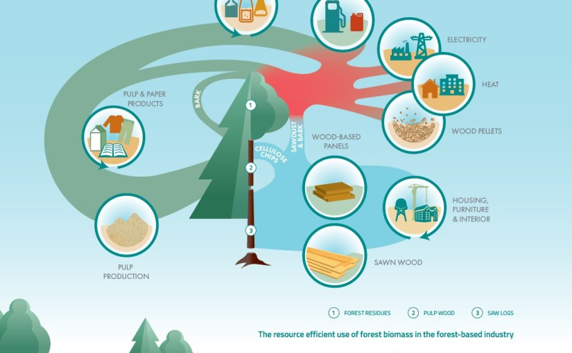 Forests and the bioeconomy: still high on European policy agenda